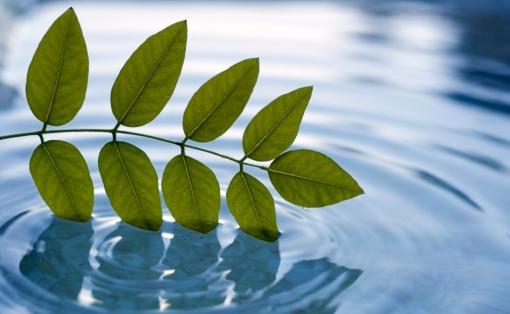 Pastoral Care leaf